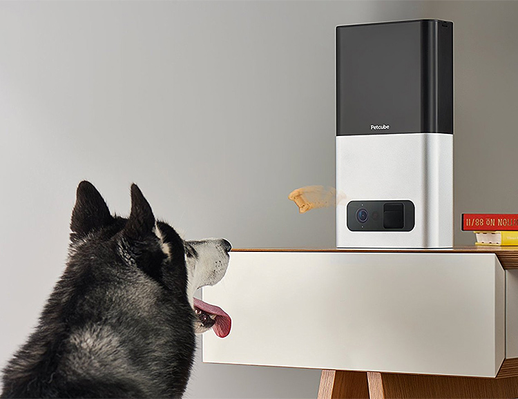 The Petcube Bites Pet Camera Will Fling Your Dog Treats, Remotely at werd.com