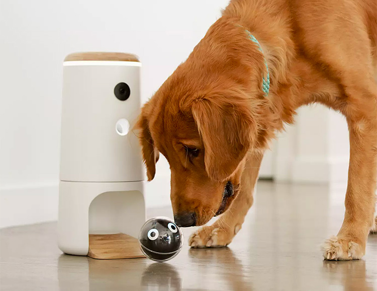 Pupple Lets You Play with Your Pooch from Anywhere at werd.com