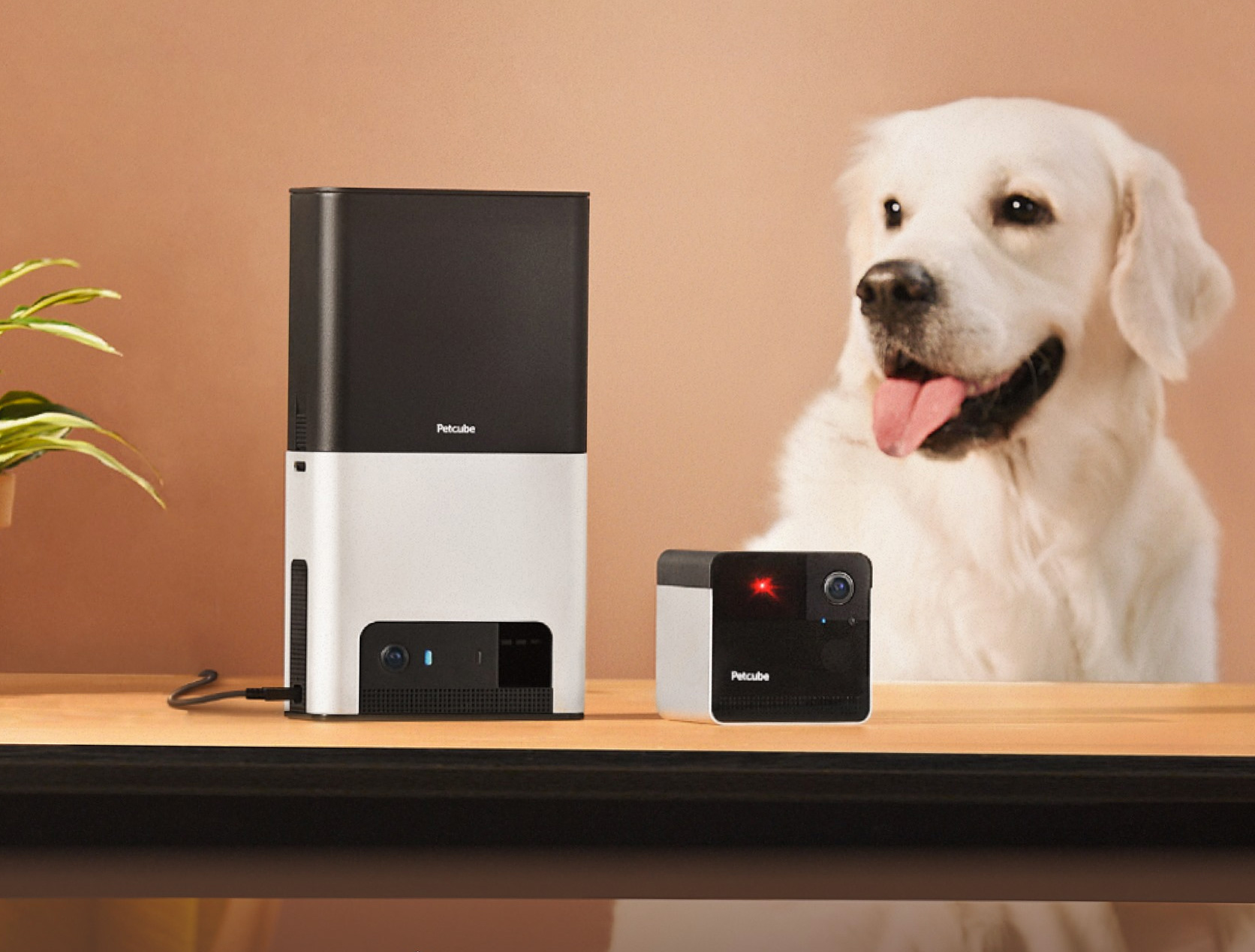 Petcube Adds Alexa To Bites 2 & Play 2 System at werd.com