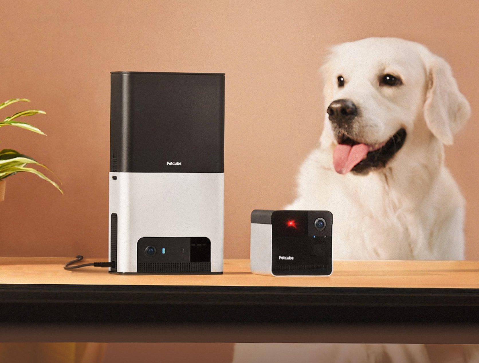 Petcube Adds Alexa To Bites 2 & Play 2 System at werd.com