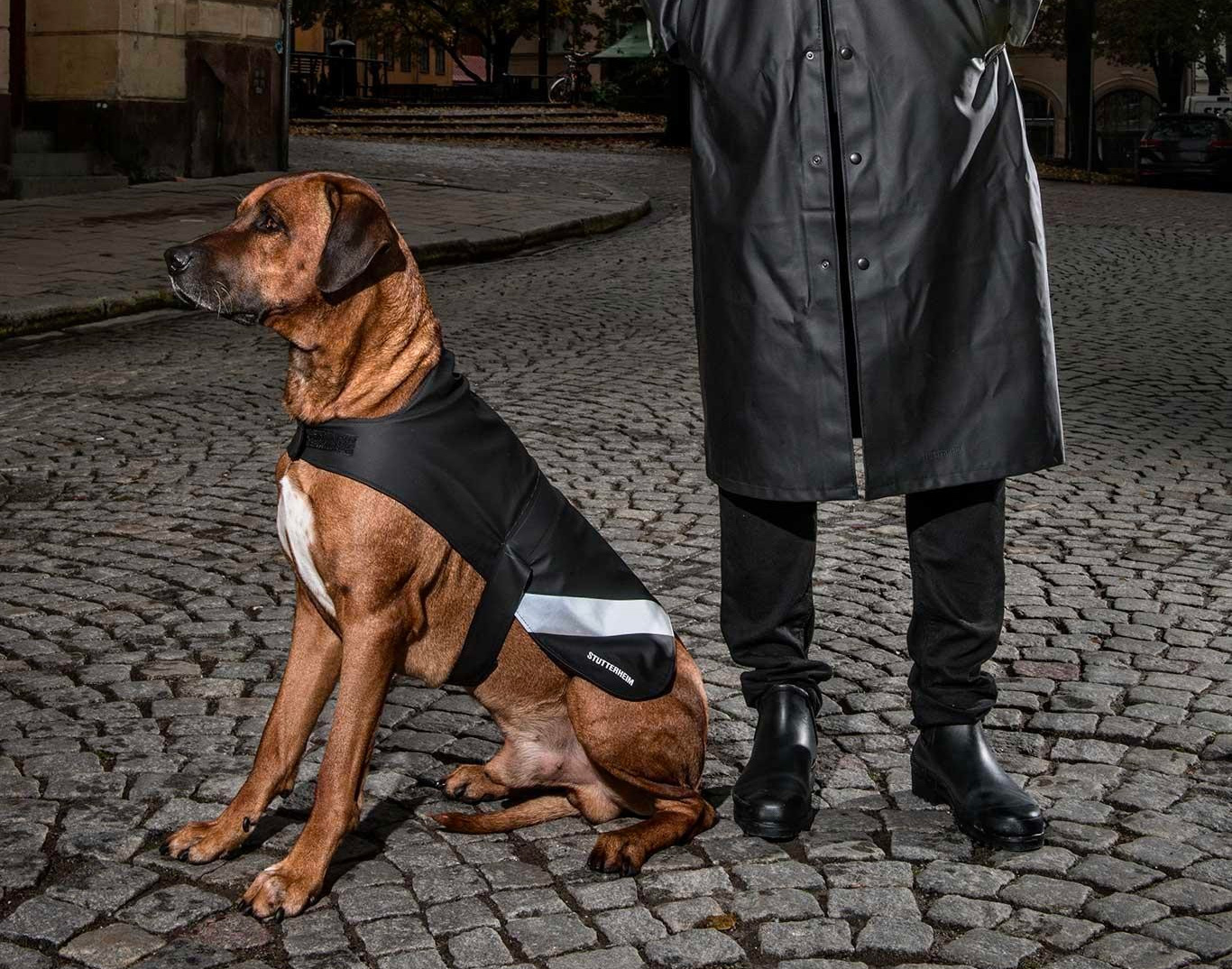 These Dog Raincoats Give Your Best Friend Shelter from the Storm at werd.com