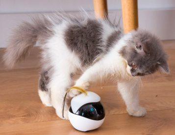 Ebo is a Robotic Playmate for Your Feline