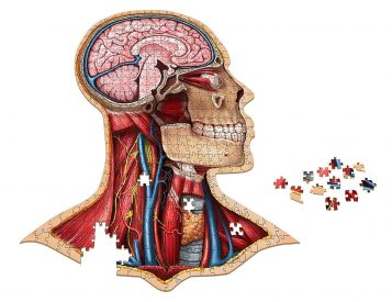 Explore Human Anatomy with a Scientific Jigsaw Puzzle