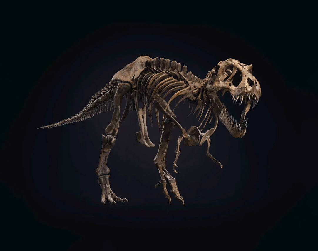 They Make Great Pets: Own Your Own T-Rex at werd.com