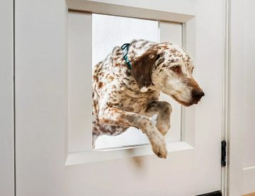 Empower Your Pets with the Ultimate Doggy Door