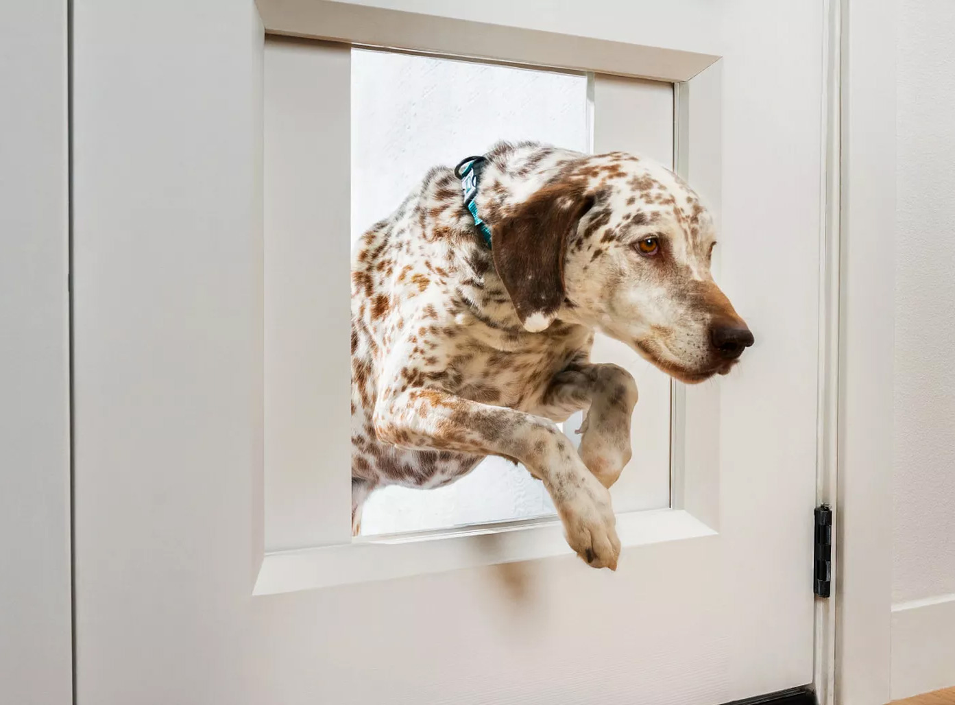 Empower Your Pets with the Ultimate Doggy Door at werd.com