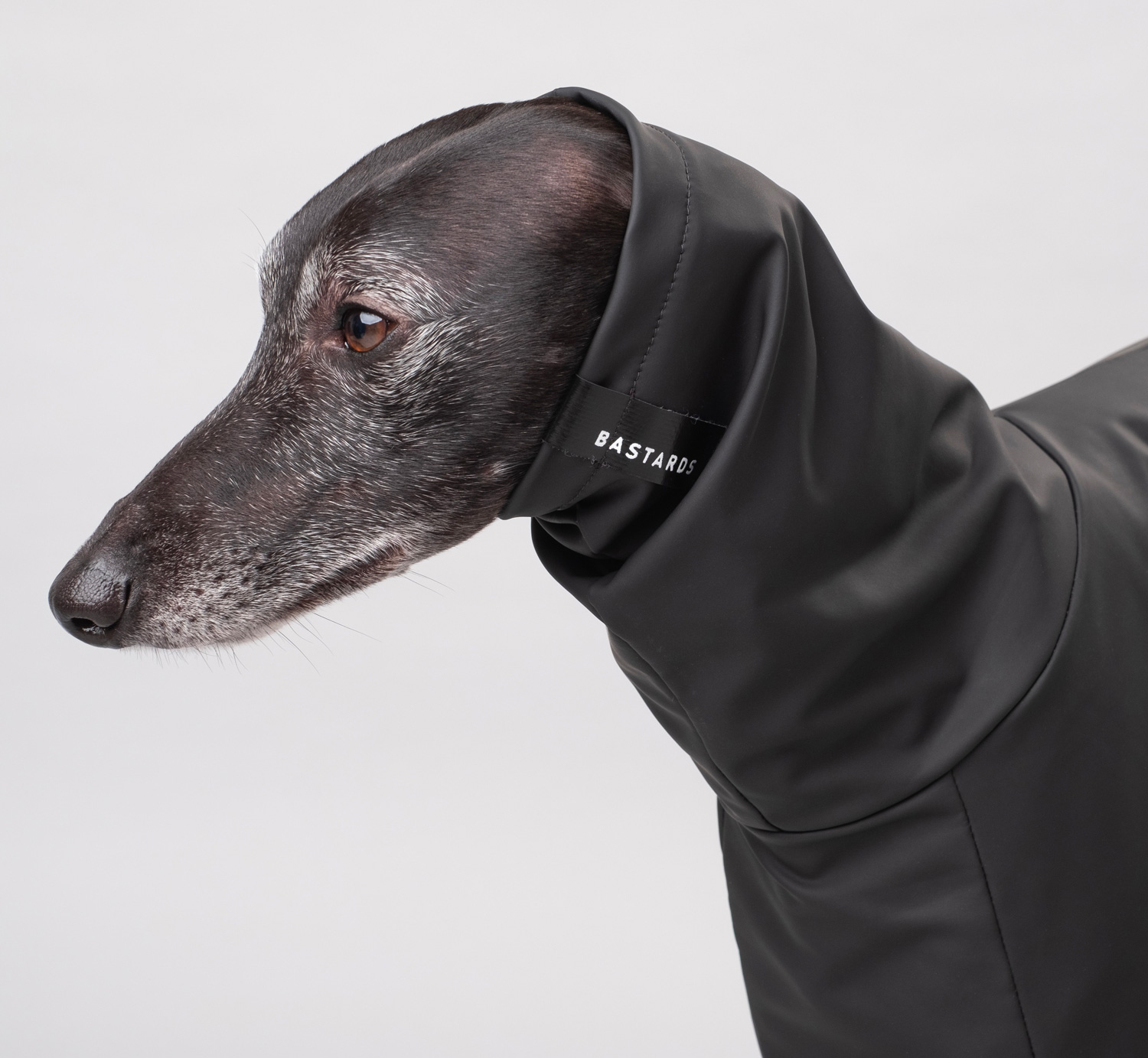 Keep Your Doggo Dry with Bastards All-Weather Wear at werd.com