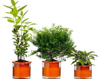 With the Wet Pot System, Your Plants Will Water Themselves